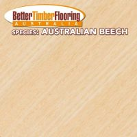 Hardwood Species: Australian Beech