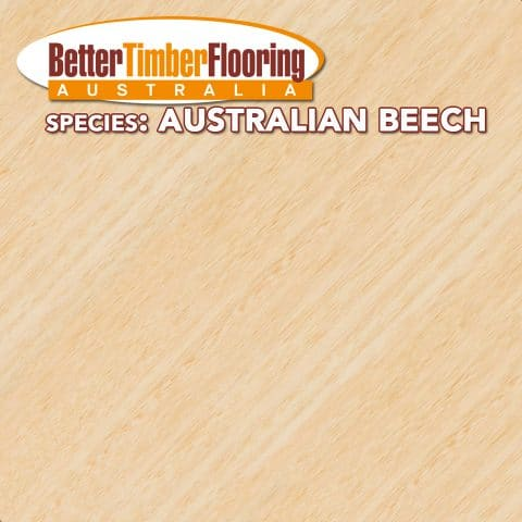 Australian Beech. Australian Hardwood Specification Data