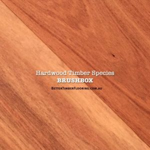 Floorboards of Hardwood Species: Brushbox