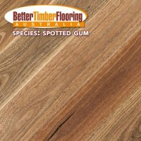 Hardwood Species: Spotted Gum