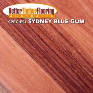 Sydney Blue Gum