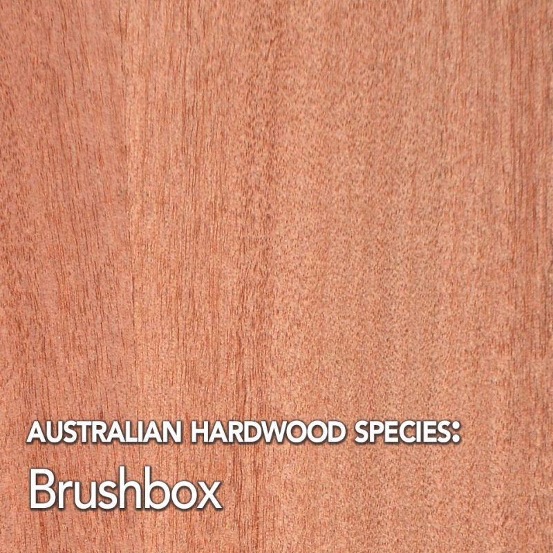 Brushbox: Australian hardwood species swatch