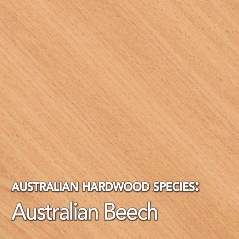 Australian hardwood timber species swatch: Australian Beech