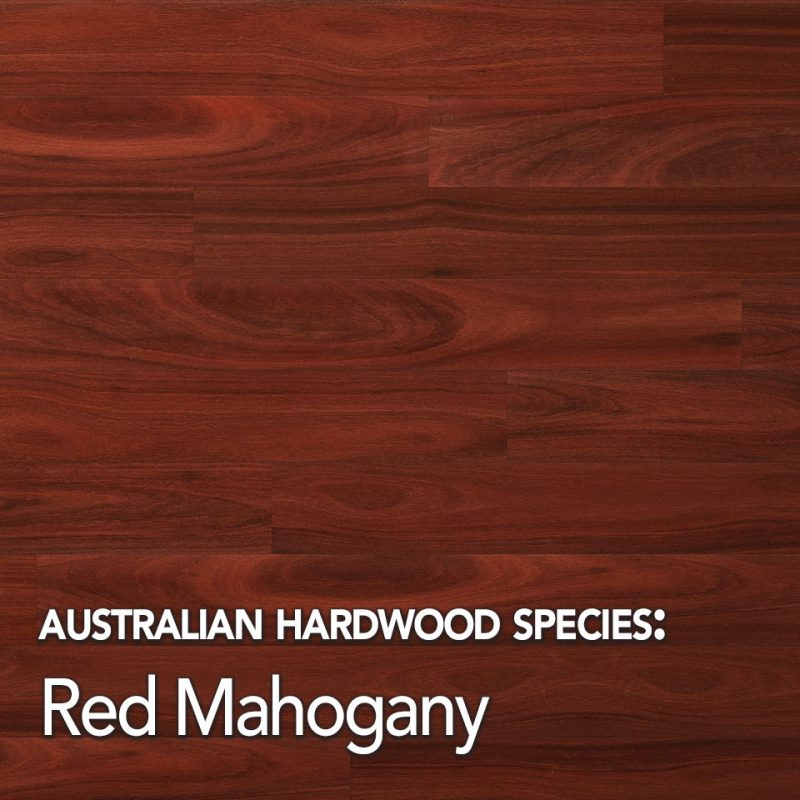 Red Mahogany: Australian Hardwood species swatch