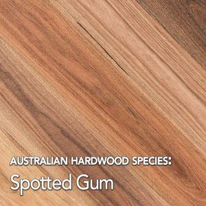 Spotted Gum hardwood species swatch