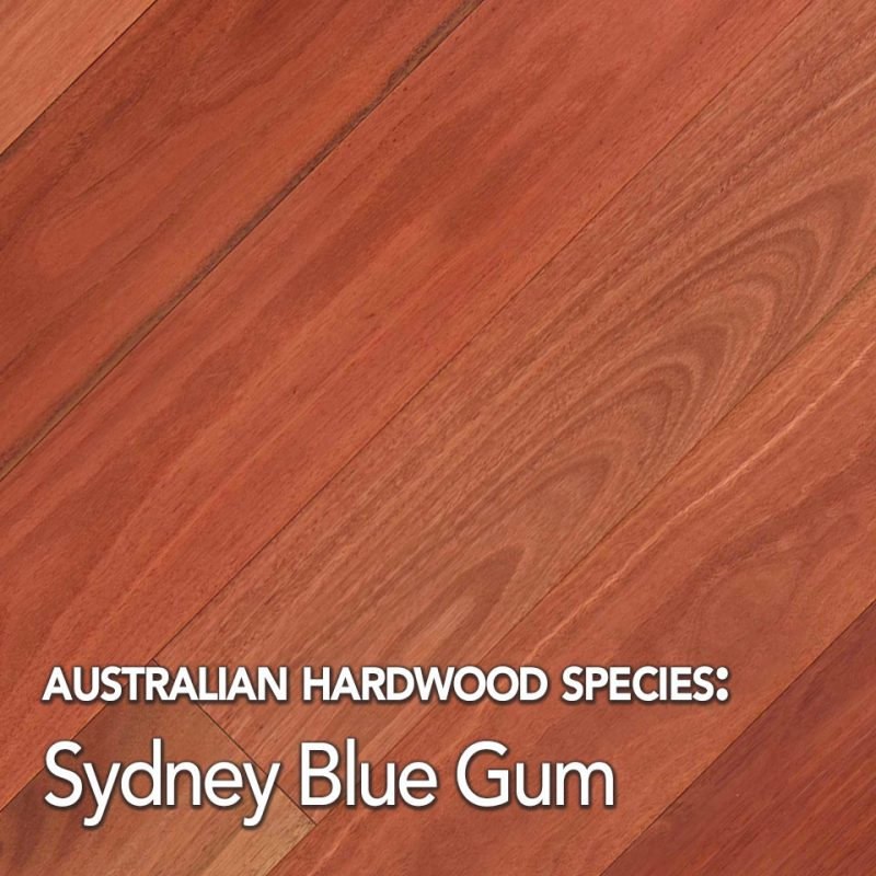 Sydney Blue Gum: Australian Hardwood species swatch
