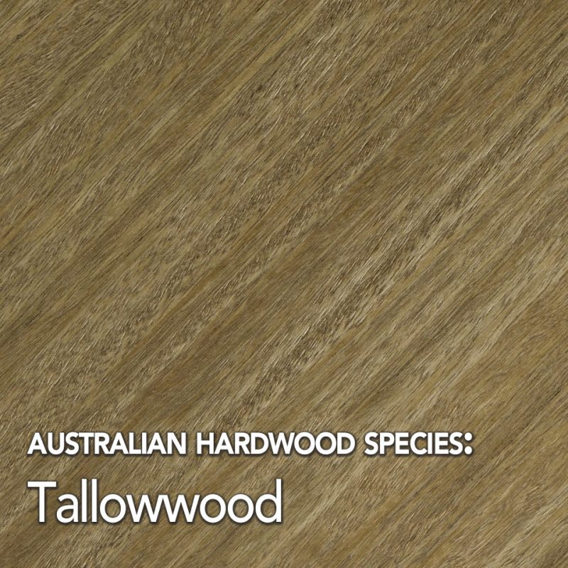 Tallowwood timber species swatch