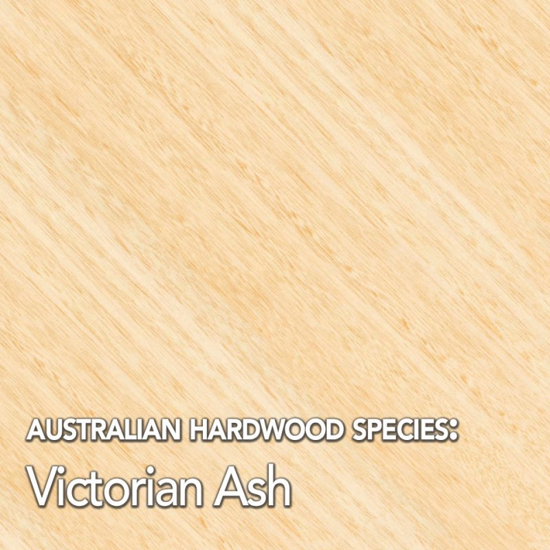 Victorian Ash Hardwood Timber Species Swatch
